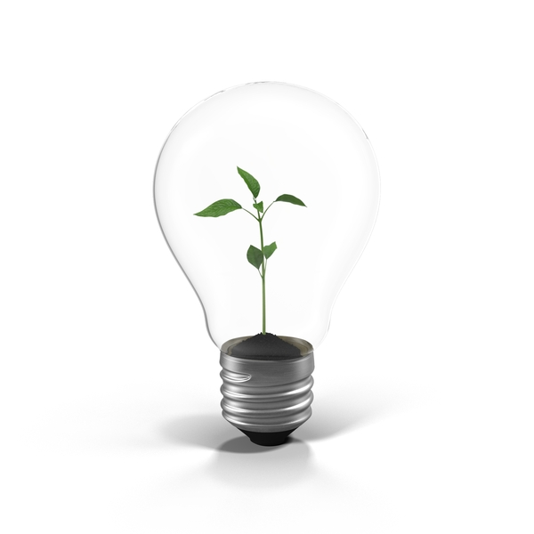 Plant in a Light Bulb Object