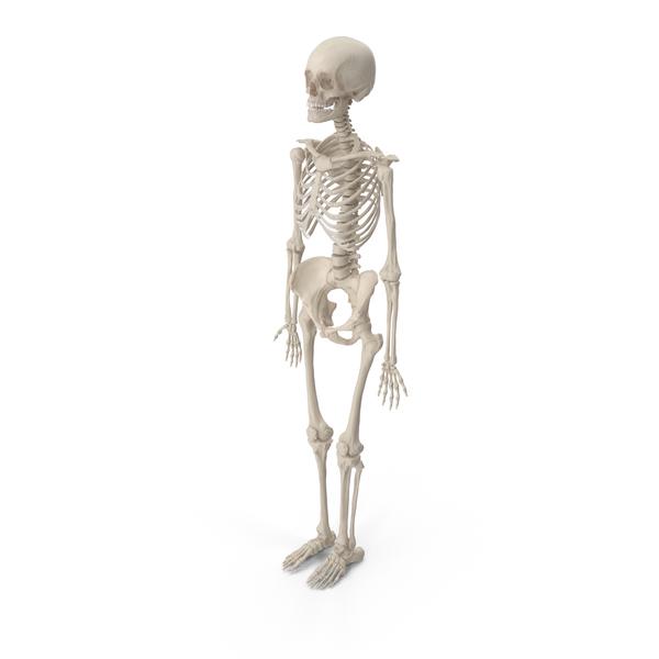 Female Skeleton Object