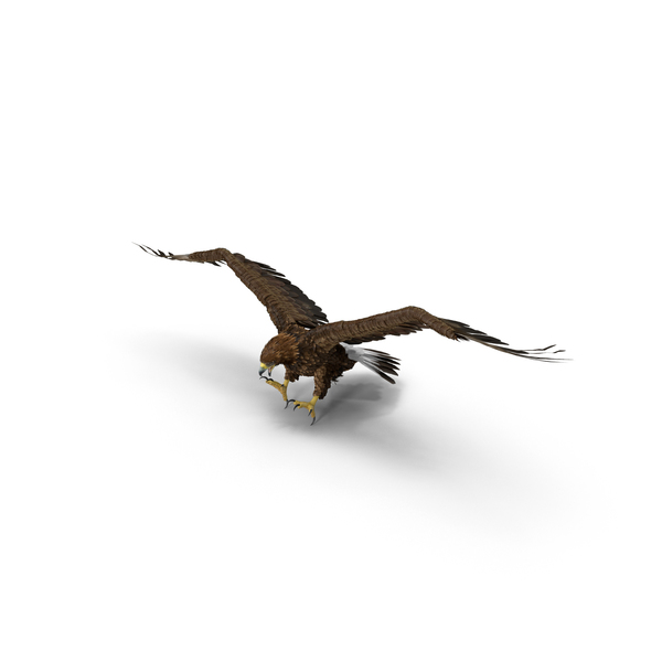 Golden Eagle Attacking Object