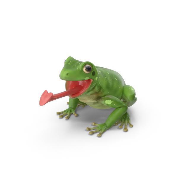 Australian Green Tree Frog Object