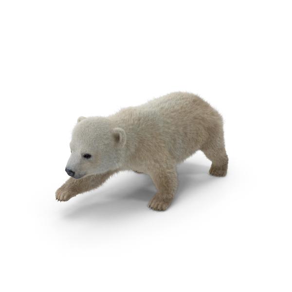 Baby Polar Bear Object