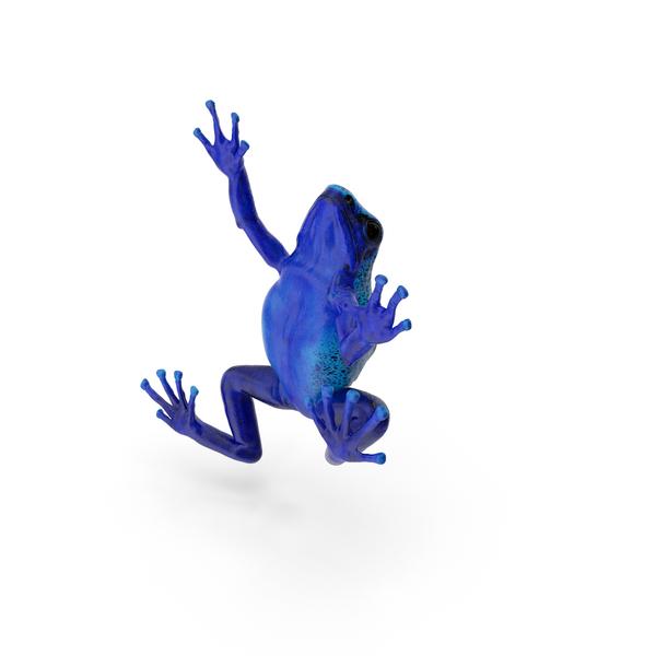 Poison Dart Frog Object