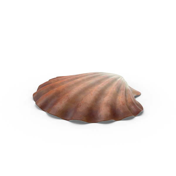 Clam Shell Object